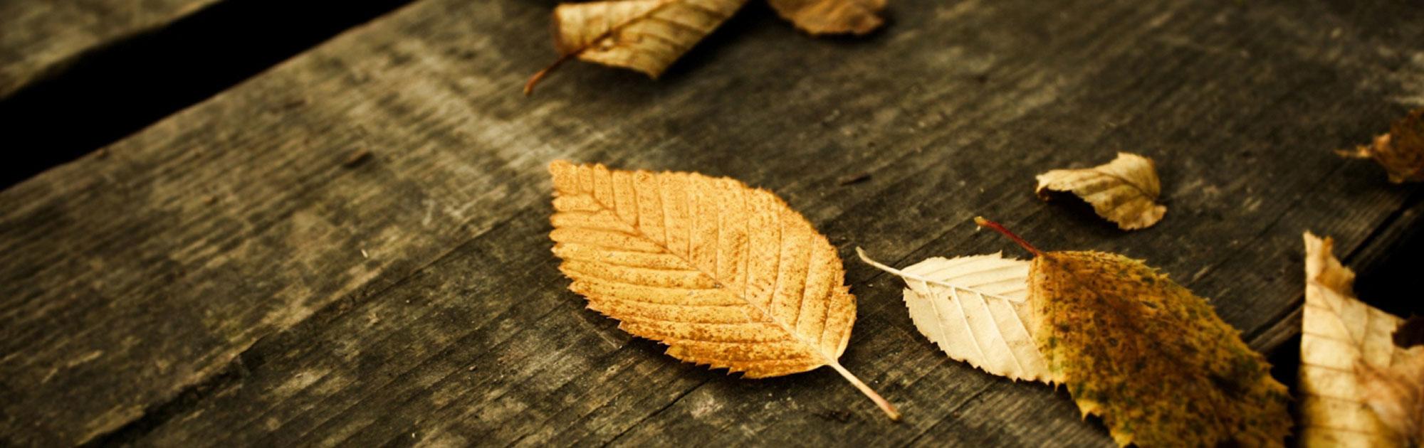 vn_slider_autumn2